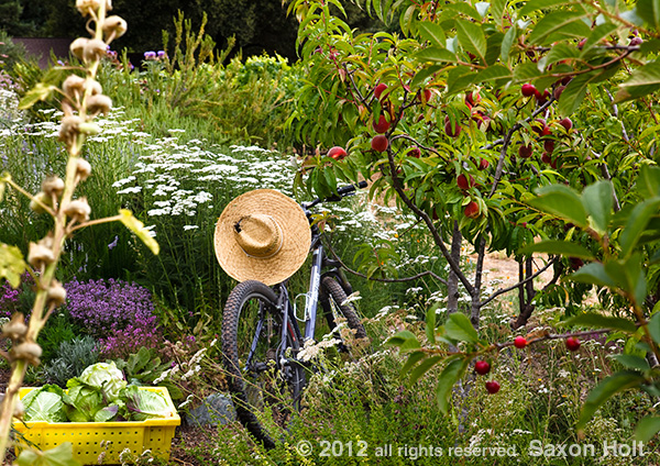 gardeners bike in summer garden