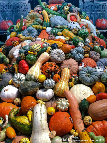 Mountain of gourds at Heirloom Expo