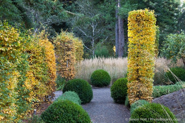 globes of boxwood shrubs and columns of hornbeam trees