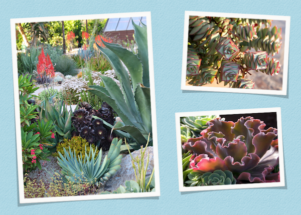 March 22: Three of the 60+ images I showed during my presentation for the San Diego Master Gardeners.