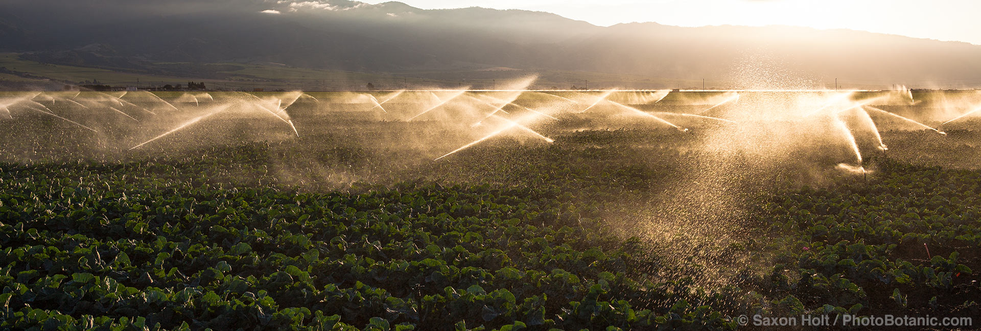 farm irrigation california
