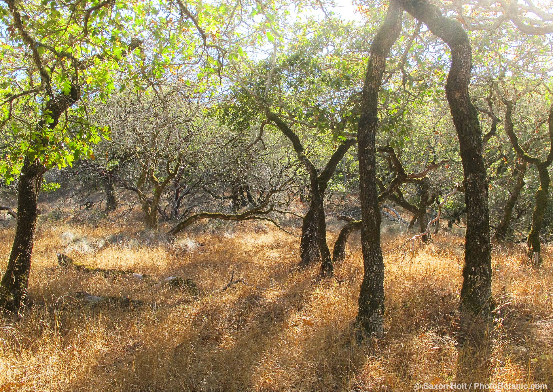 dry summer woodland california